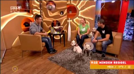 RTL KLUB reggeli műsor