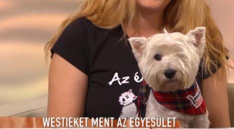 TV2 Mokka