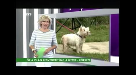 RTL klub fókusz